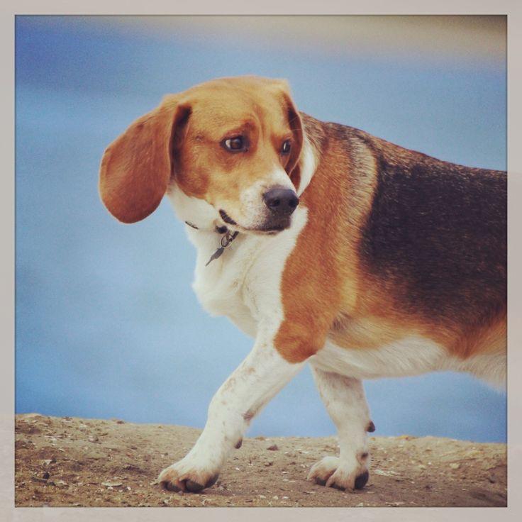 san diego dog hikes!