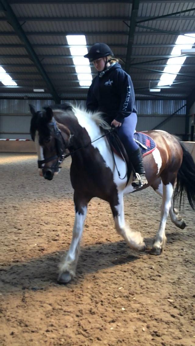 Schooling #flatwork #equestrian
