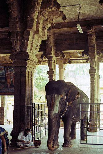 trichy - sri ranganathaswamy temple - temple elephant