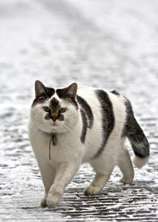 36 Cats With Totally Cool Markings Cute Cats Beautiful Cats