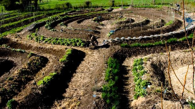 80 procent af verdens fødevarer produceres af små, uafhængige landbrug, fremgår…