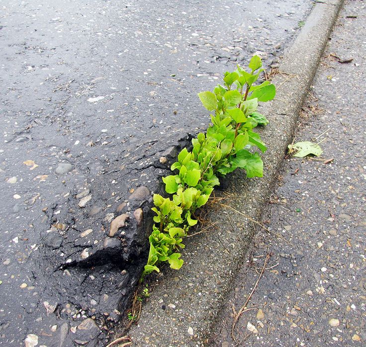 flower-tree-growing-concrete-pavement-7