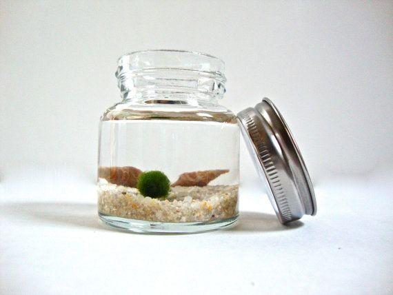 Mini Jar Marimo Moss Ball Aquarium, Underwater Moss Terrarium. $13.85, via Etsy.