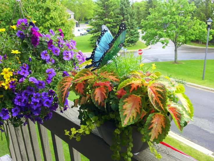 Butterfly Garden Ideas garden plans for birds butterflies My Butterfly Garden Garden Ideasplantingbutterfly