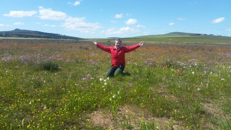 Swiss Alps and The Sound Of Music. No, it is wild flower time in Namaqualand, But you will be forgiven for bursting into song at the sight of those fields of colour.