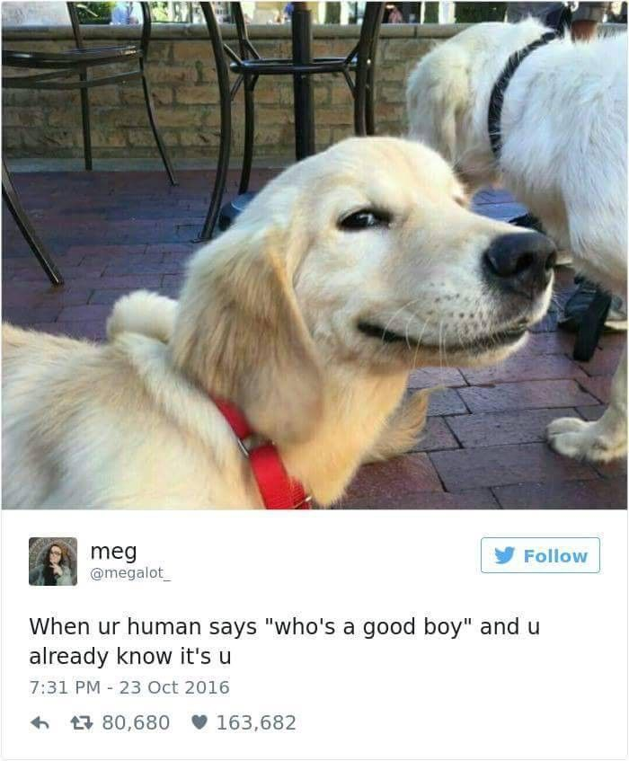Golden Retriever In A Shopping Cart Cute Animal Memes Funny