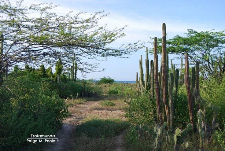 #Desert #landscape of #LaGuajira, #Colombia with the #CaribbeanSea in the background.   www.trotamuda.wordpress.com