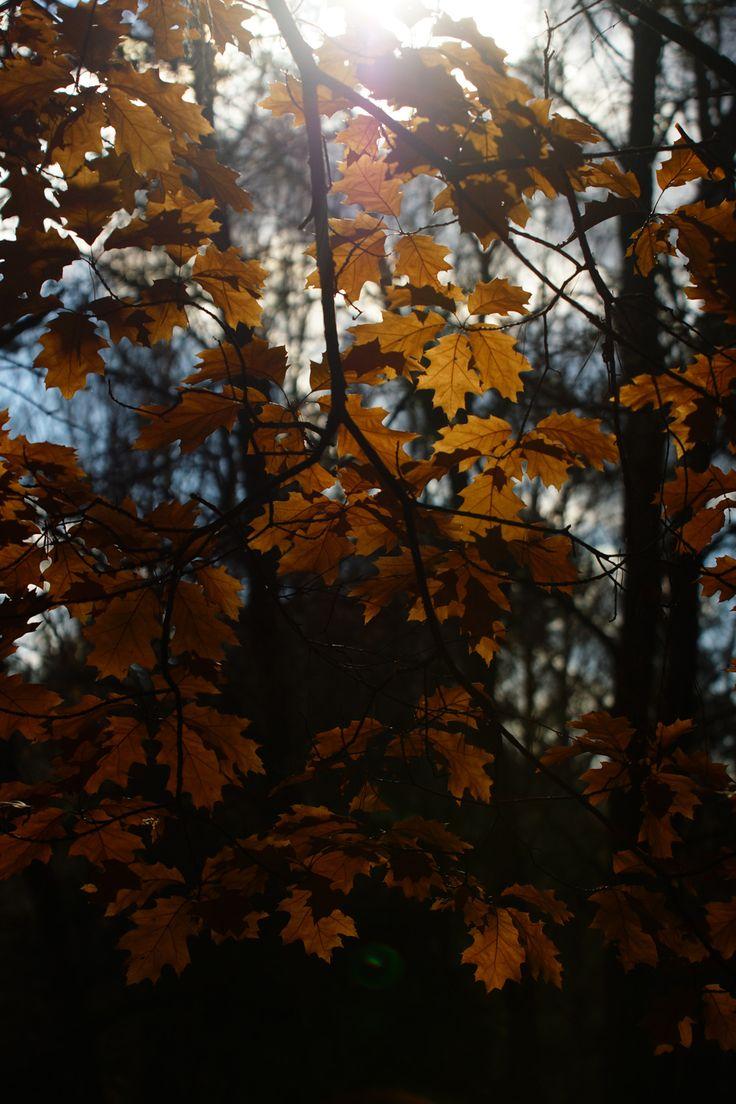 Профессиональный фотограф.«Осенние этюды»