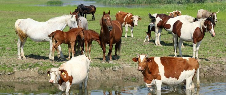 Nederlands blijft toch een gek taaltje, want waarom heeft koe het lidwoord 'de' en paard het lidwoord 'het'? KIJK geeft antwoord.