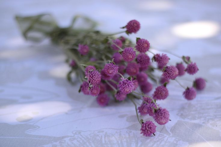 Lavender/Pink Dried Globe Amaranth Bunch, Lavender/Pink Dried Gomphrena Bunch by BranchedBloomsDesign on Etsy https://www.etsy.com/listing/555572473/lavenderpink-dried-globe-amaranth-bunch