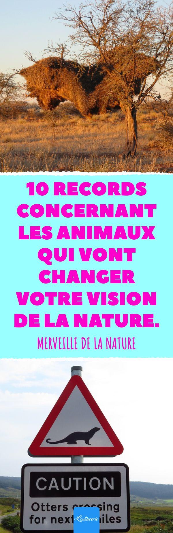 10 records concernant les animaux qui vont changer votre vision de la nature. Me…
