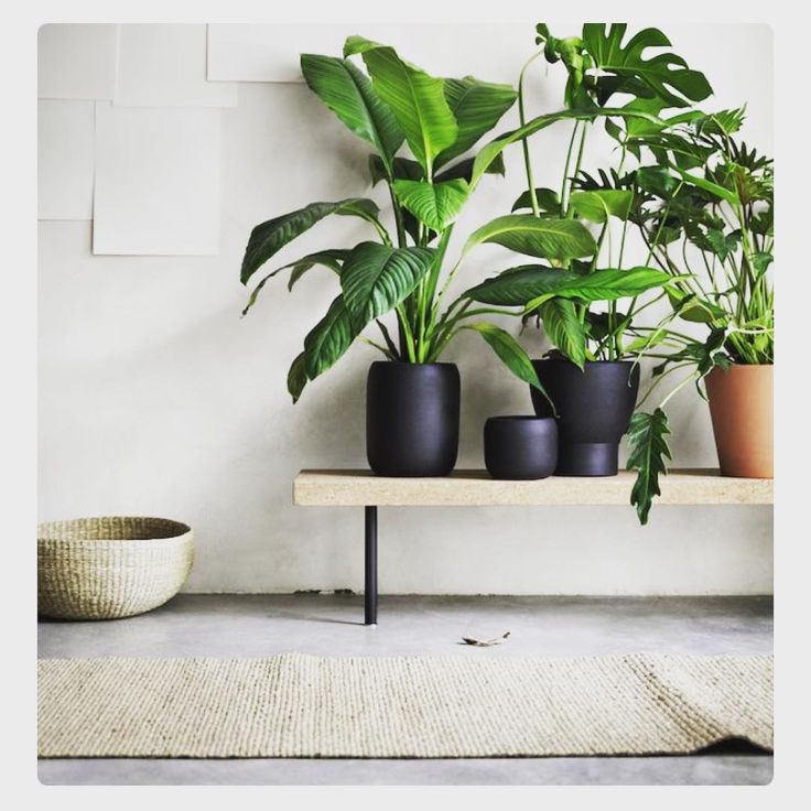 Want it all ikea vegetal pinterest plantes jardinage et vegetal - Mur vegetal interieur ikea ...