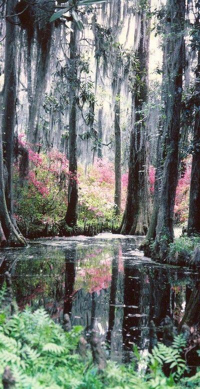 Cypress Gardens in Moncks Corner near North Charleston, South Carolina