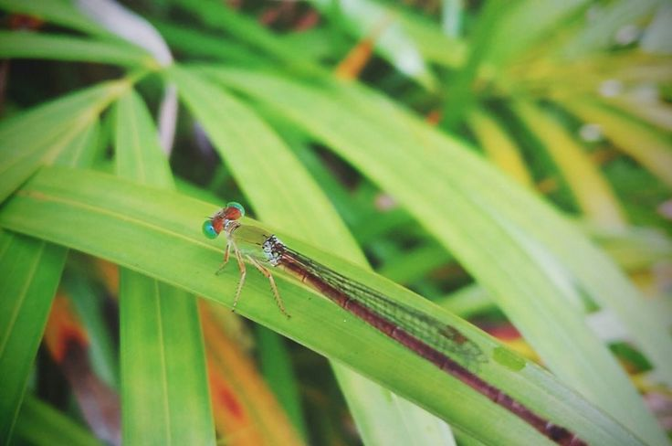 Lovely Dragonfly