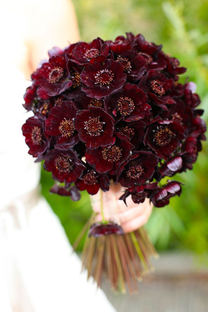 Full on chocolate cosmo bouquet by Rebecca Mays Flowers.