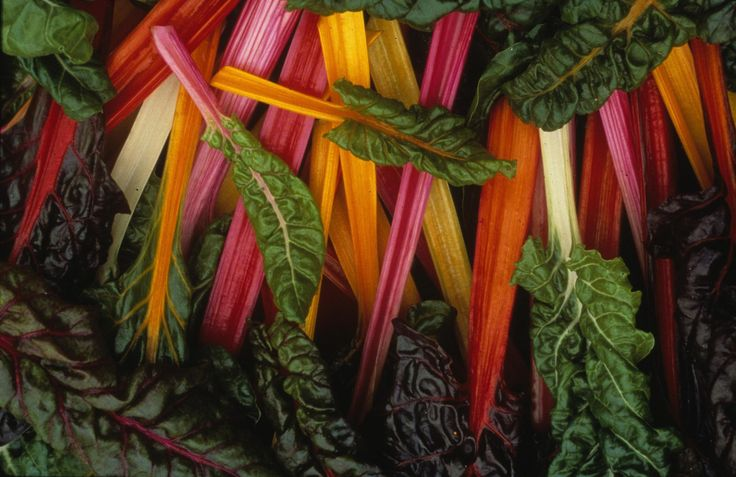 Swiss chard is an unsung hero in the world of leafy greens. It has a taste very similar to spinach, but in a larger, slightly more durable leaf.