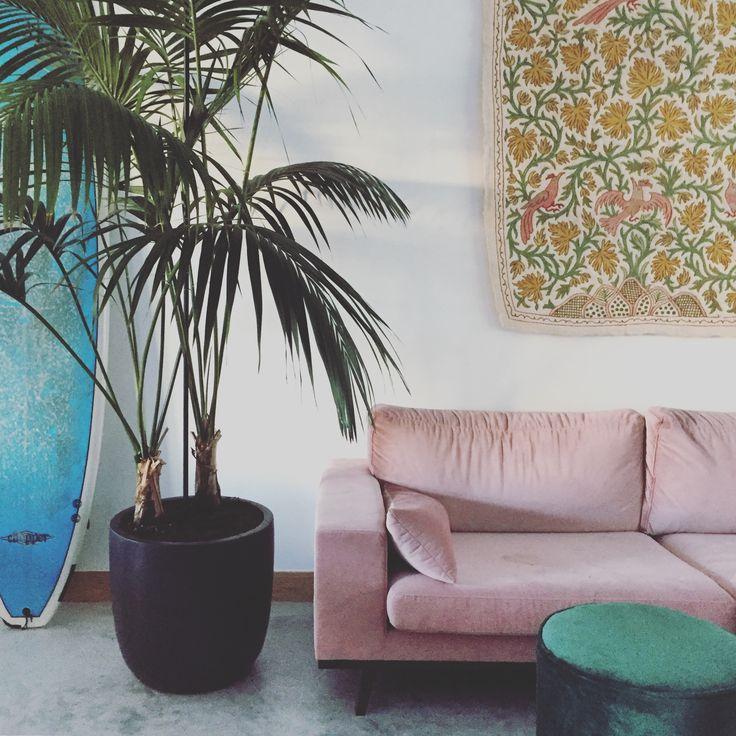 concerte floor, velvet couch, pams, surfboard, interior
