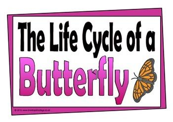 A set of printables about the life cycle of a butterfly. Each page is numbered to show the stage of a butterfly's life, which will help students understand the relevant order. Visit our TpT store for more information and for other classroom display resources by clicking on the provided links.