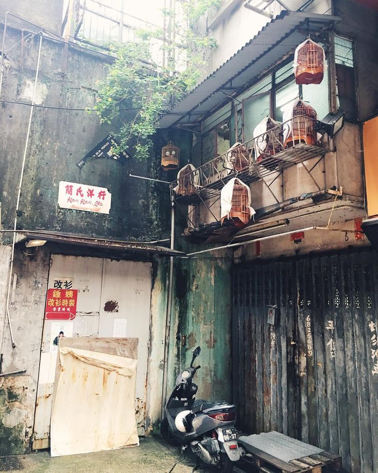Scooter bird cages tree growing out of the wall - my Macau @livelovemacau || Когда живёшь в Китае и порой не замечаешь какой Китай вокруг   #макао#китай#канарейки#город#macau#macao#livelovemacau#happylife#china#livinginchina#happy#wonderlust#macauig#macau_ig#macaoig#macaogirl#853#853ig#853girl#scooter#birdcage#jungle#urbanjungle by katya_maia