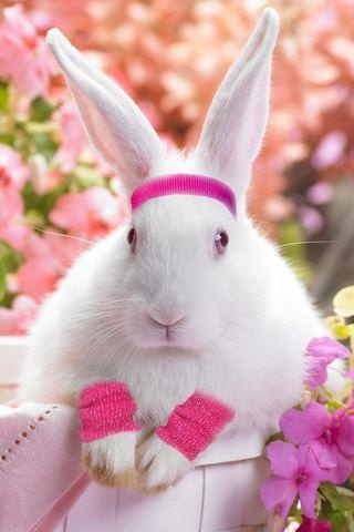 Cute White Baby Rabbits Wallpapers Bunny Dressed In 80 S Exercise Gear Bunny Rabbit