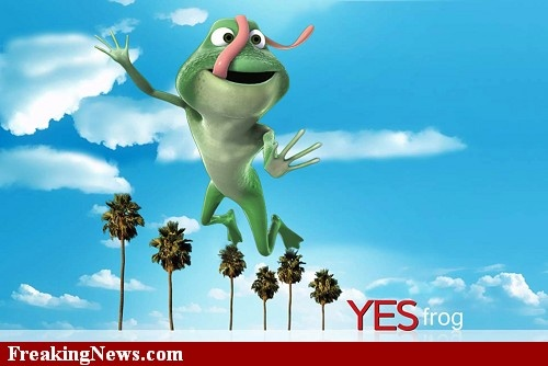 Yes frog: Funny Pictures, Florida, Frogs, Friend, Frog Art