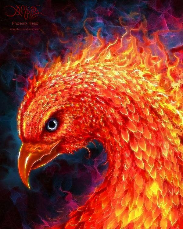 Phoenix Head