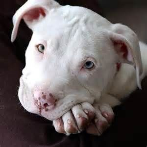 End the ban of pit bull type breeds in Ontario, Canada · Causes