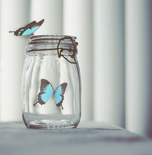 What a beauty, but it's trap #butterflies #blue