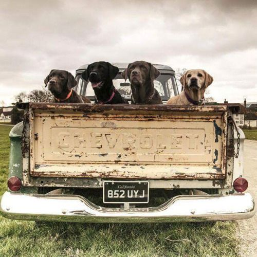 Two of my favorites... Old dogs and an old truck...timeless