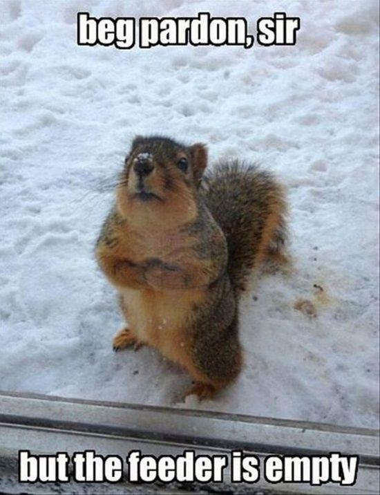 1e95774cfcde143a9fb45986c8175756 door ideas funny animal memes 58 best funny animal memes images on pinterest animals, funny,Funny Animal Memes