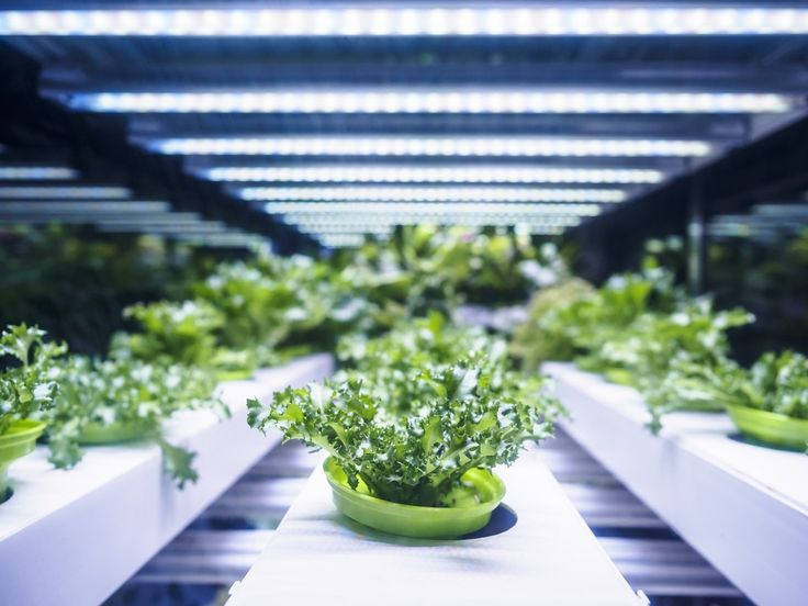 What is the Future of Container Farming? AgFunderNews in