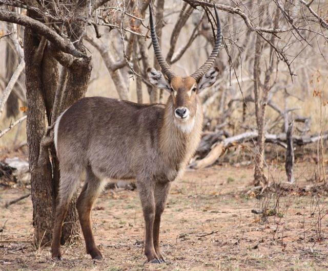 36 best Gazelles images on Pinterest   Thomson gazelle ...