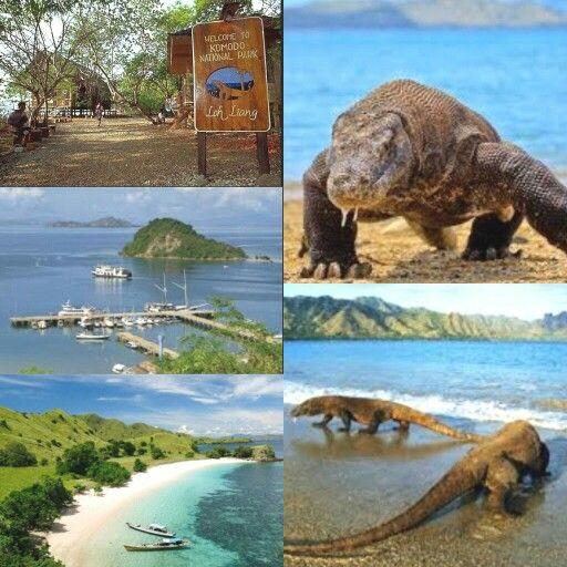 Komodo island,NTT Indonesia