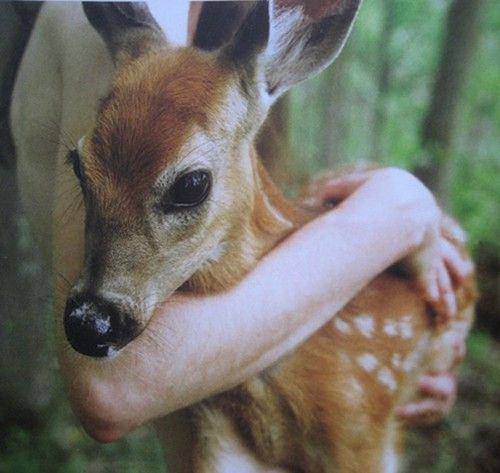 .Baby Deer, Fawns, Nature, Sweets, Bambi, Pets, Beautiful, Woodland Creatures, Animal