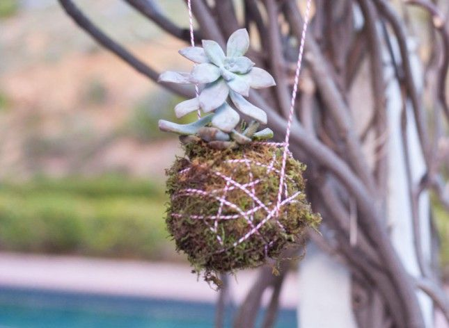 How to Create a Hanging Succulent Planter | Brit + Co
