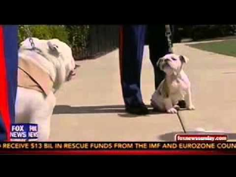 Fox - Sgt. Chesty the Bulldog, Power Player of the Week - YouTube