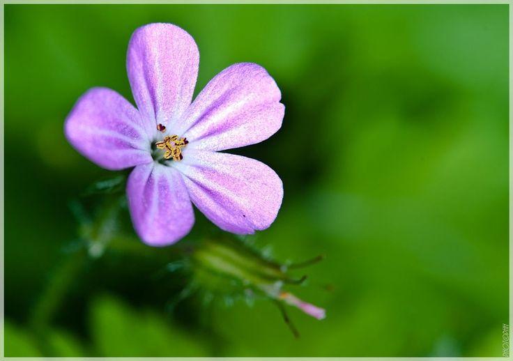 Flower  by peter.h.hansen1