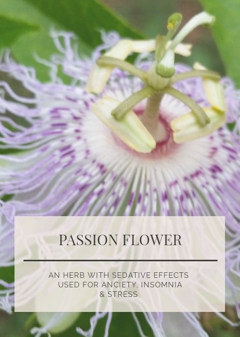Pin By Andrea S Organic Market On Herb Benefits Usages Lemon Balm Tea Passion Flower Herbs
