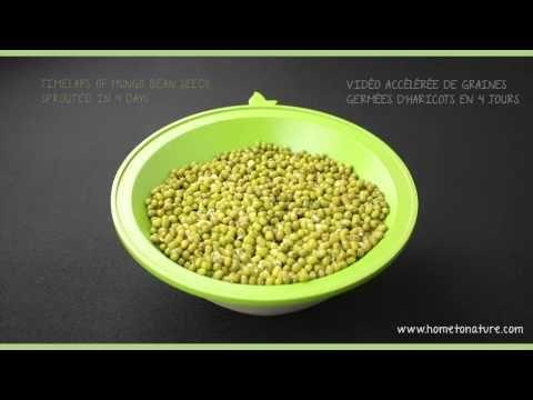 tableau récapitulatif des graines que vous pouvez faire germer.