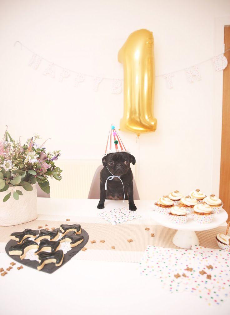 Happy Birthday Nala!