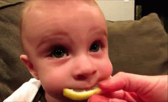 Baby eating lemon! I haven't laughed this hard. Ever.