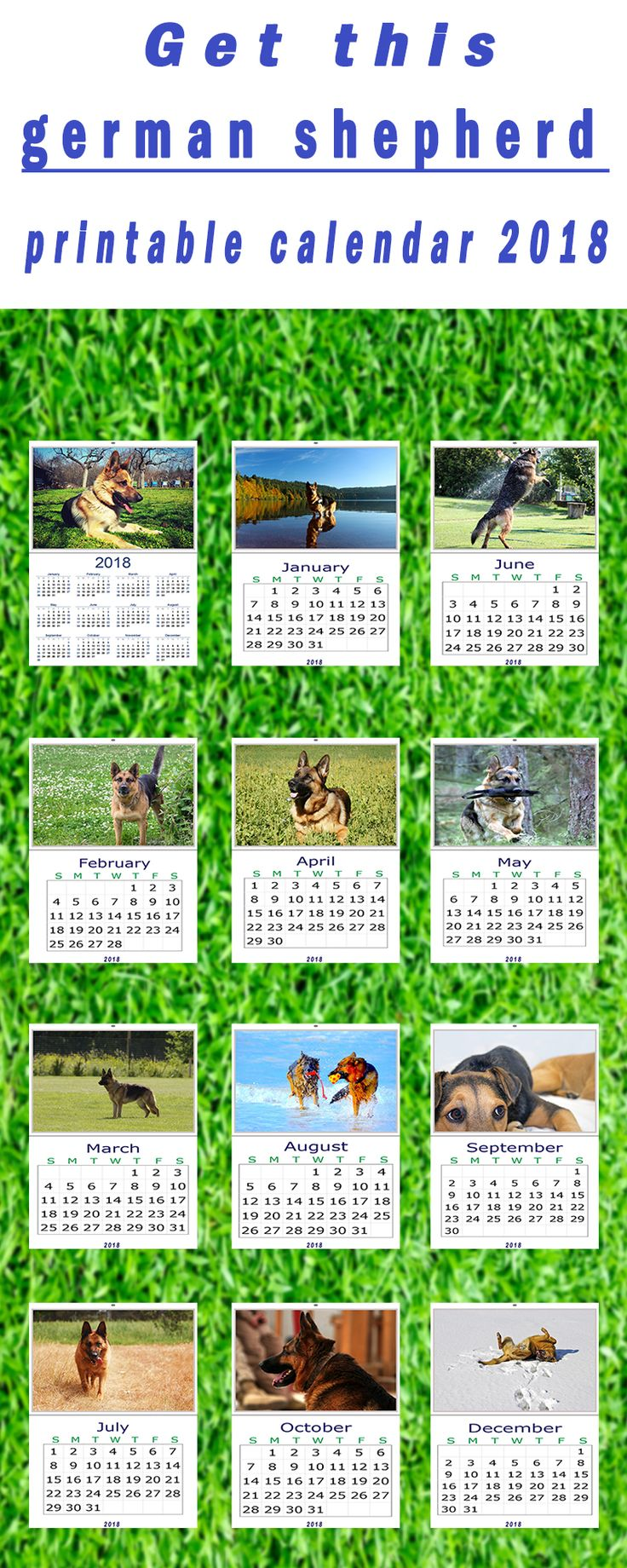 Fabulous If you are a germanshepherds lover then you must take a look at this german