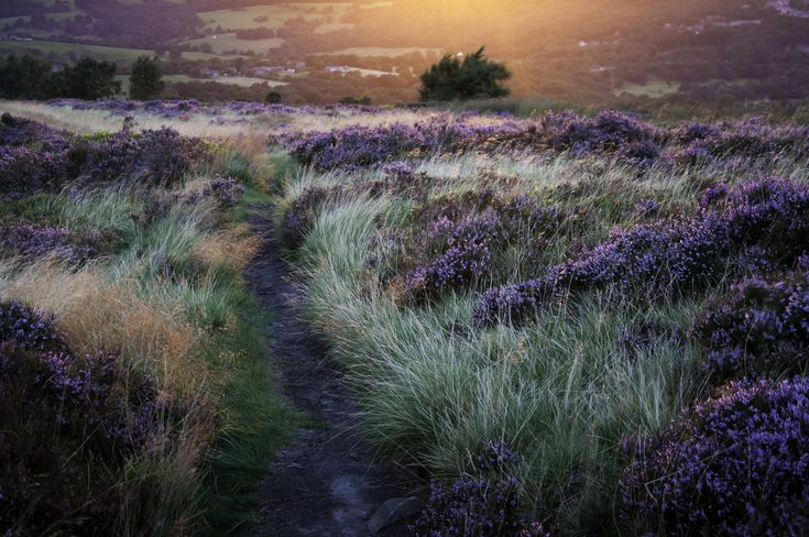 Landscapes and grasses by Andrew Kearton.