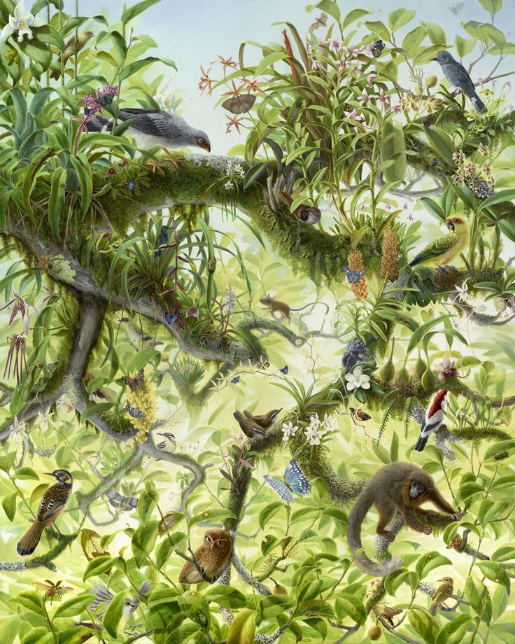 Titled 'Nova: Canopy,' this meticulously detailed painting by Isabella Kirkland (an artist and a research associate in the department of aquatic biology at the California Academy of Sciences) brings together plants and creatures found in the rainforest canopy, though not all in the same geographic location. http://www.earthisland.org/journal/index.php/eij/article/still_life_with_life/
