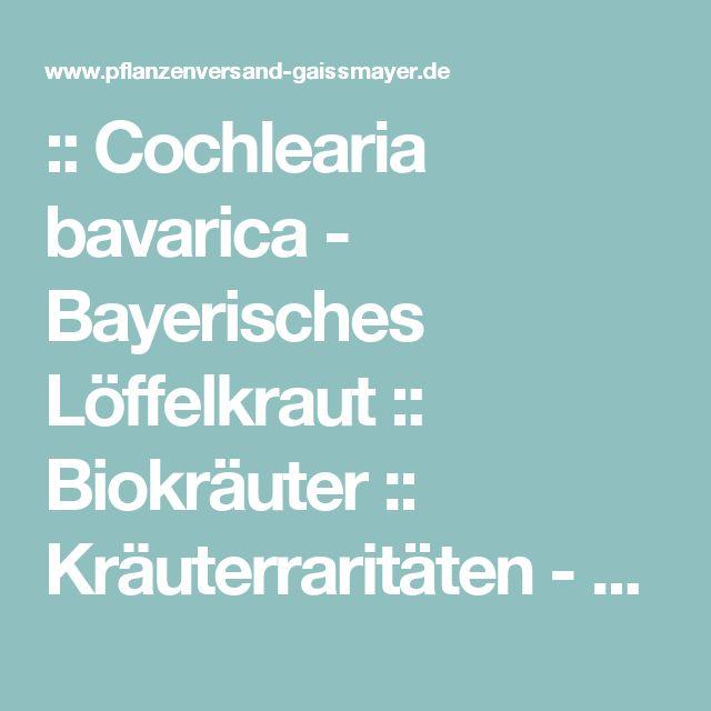 :: Cochlearia bavarica  - Bayerisches Löffelkraut :: Biokräuter :: Kräuterraritäten - Pflanzenversand Gaissmayer