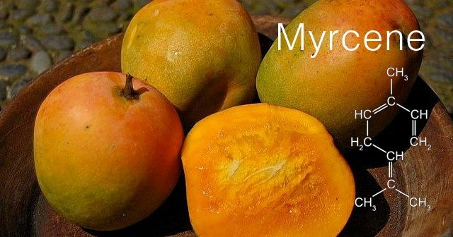 Terpene Profile: Myrcene, Source: Original Compilation by The Leaf Online and http://static.polskieradio.pl/85af0f72-3d52-4fa5-aa24-13abd80031a3.file