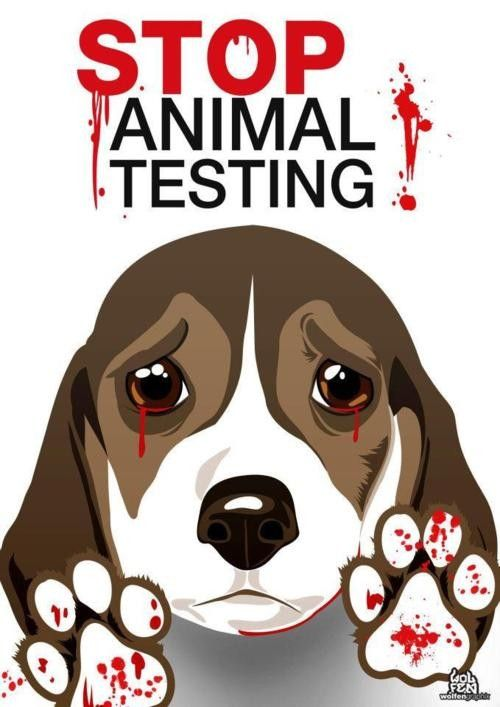 "animal testing to keep animal Animal testing is bad science: ""science has a responsibility to use animals to keep looking for cures for all the horrible diseases that people suffer from."