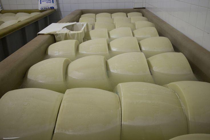 La salagione. Salting our Parmigiano Reggiano