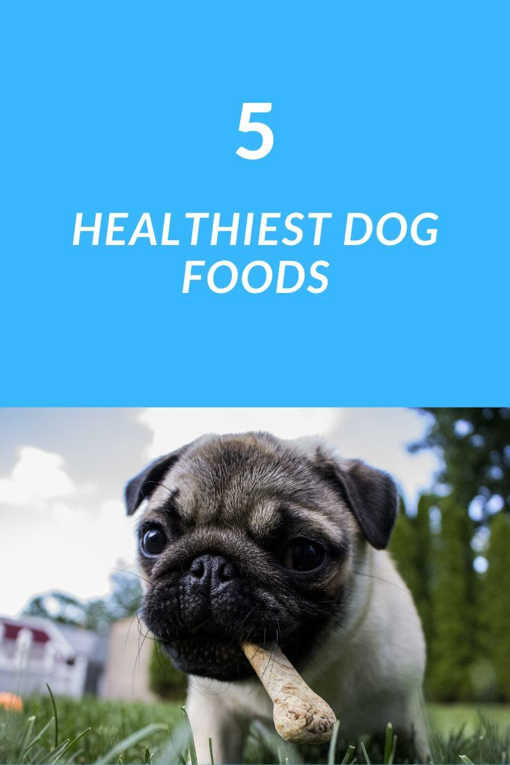 Which Dry Dog Food Is Best The Best Dry Dog Food You Can Buy
