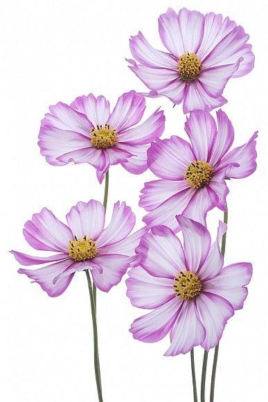 Арт фото Квіти на полотні, друк фотографій на полотні, купити фото тюльпанів, троянд, орхідей, маків в Києві